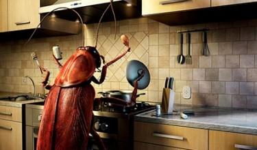 К чему снятся много тараканов
