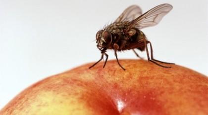 муха на яблоке