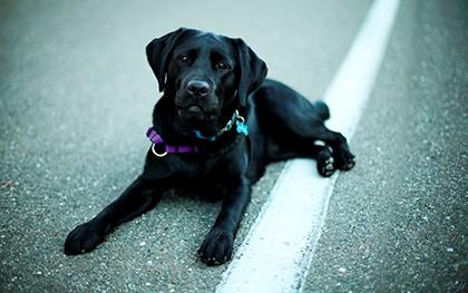 чёрная собака на дороге