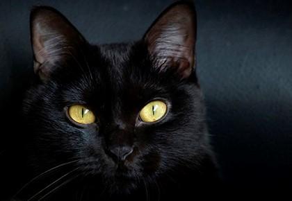 чёрный кот на свету