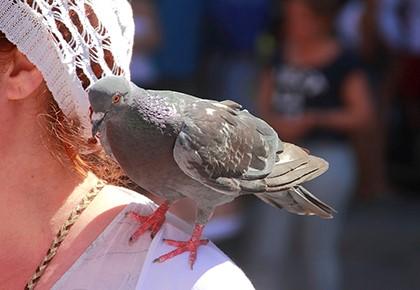 голубь на плече