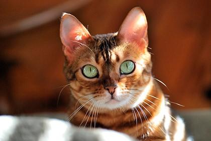 Примета коты гадят в доме