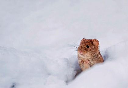 О погоде по животным