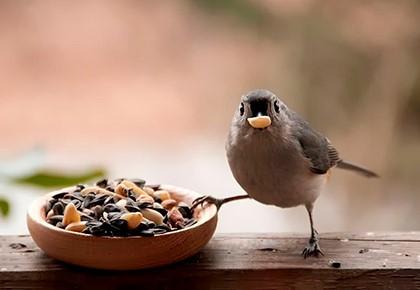птица ест