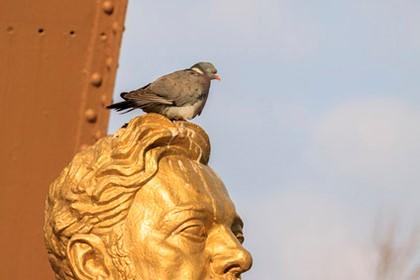 голубь нагадил на памятник