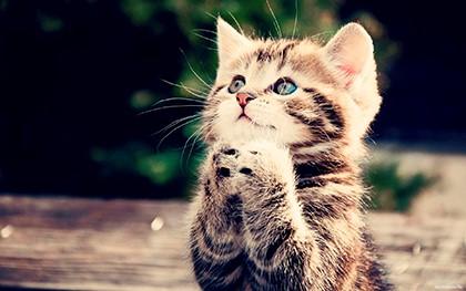 котёнок молится