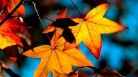 осенние листья под солнцем