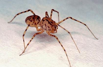 паук на белом