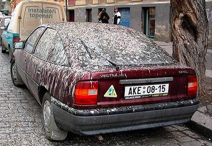 птицы загадили машину