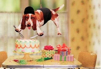 собака режет торт
