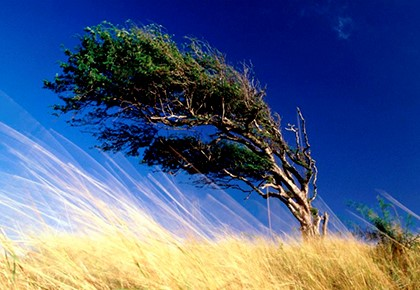 ветер гнёт дерево