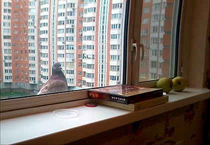 голубь за окном
