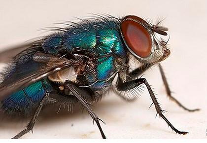 муха готова лететь