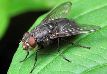 муха на листе