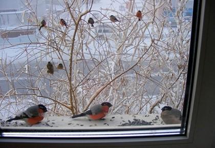 птицы едят семечки с подоконника