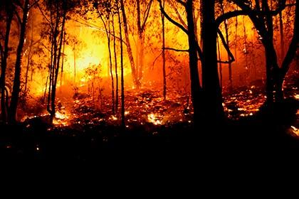 лес догорает