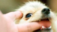 маленькая собака укусила за палец
