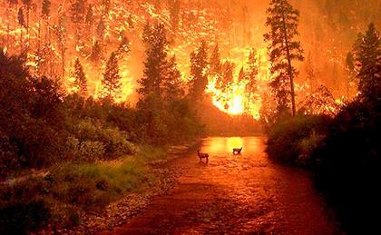 склон в огне