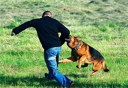 собака кусает за руку