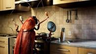 таракан готовит