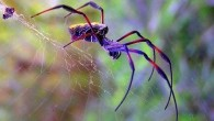 красивый паук на паутине