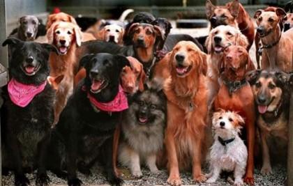 К чему снится много собака