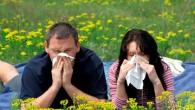 пара с аллергией на поле