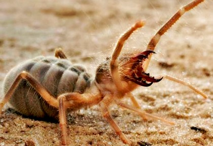 паук рычит