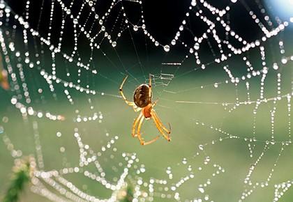 паутина в расе с пауком