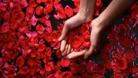 лепестки роз в руках
