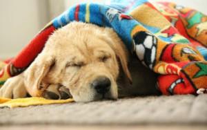 Убить собаку во сне