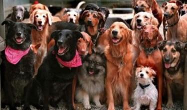 К чему снится стая собак
