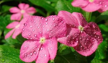 Приметы про цветы в доме