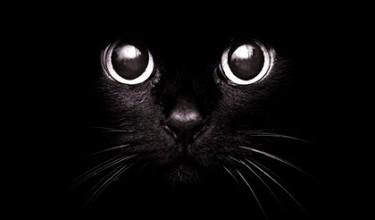 Приметы про чёрных кошек
