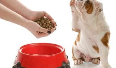 К чему снится кормить собаку