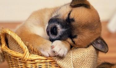 Сонники о собаках и щенках