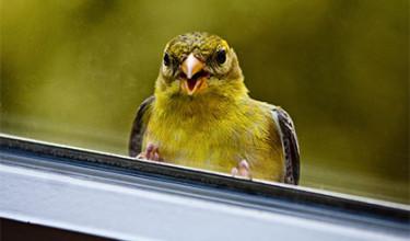Птичка на окне – примета