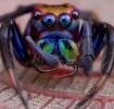 К чему снится убить паука во сне?