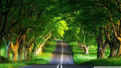 летняя дорога