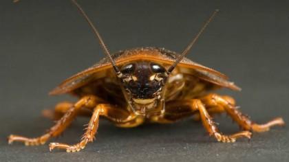 Заговор от Тараканов ▶ Сильный ритуал от тараканов в доме