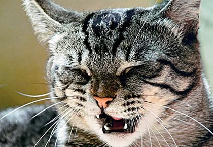 кот жмурится