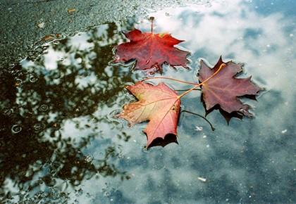 листья в луже