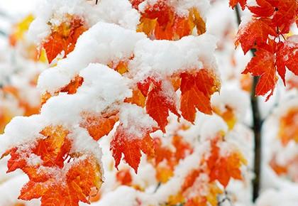 снег на осенних листьях