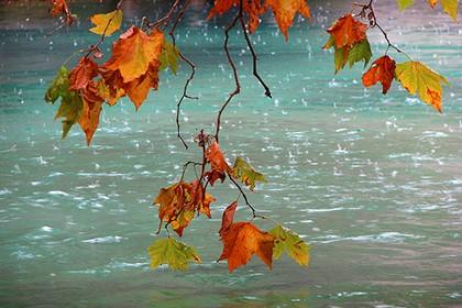 жёлтые листья под дождём