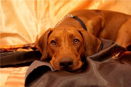 Фото Сонник укусила рыжая собака