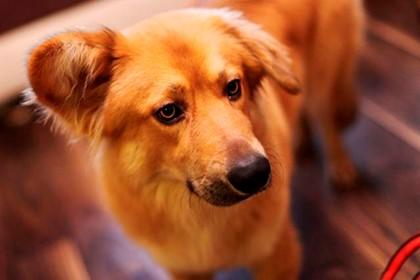 Сонник укусила рыжая собака фото